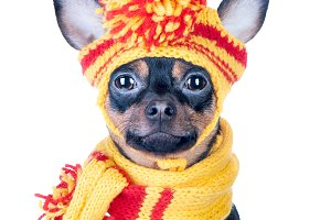 Funny dog ​​in a knitted cap