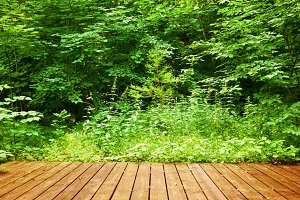 Wooden floor in a green forest