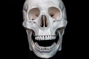 Skull. Human skull