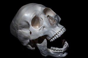 Halloween. Human skull.