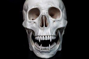 Dead vampire. Human skull