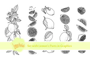 Lemon Fruit and Parts Set in Graphic
