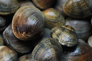 Fresh clams, seafood at the market.