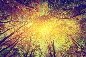 Autumn: sun shing through treetops