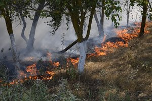 Fire in the forest. Fire and smoke