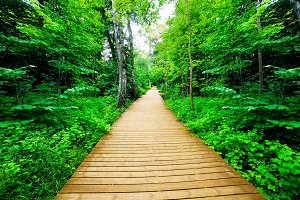 Wooden way in green forest