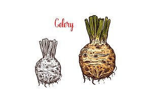 Fresh celery root sketches