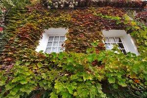 Cosy windows.