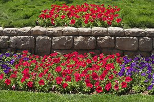 Beautiful bright flower beds in  par