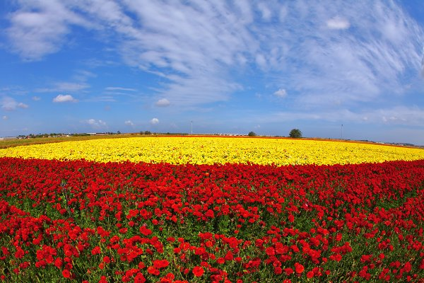 The day in fields flowers buttercup…