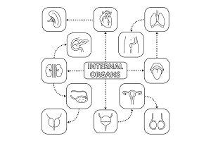 Internal organs mind map