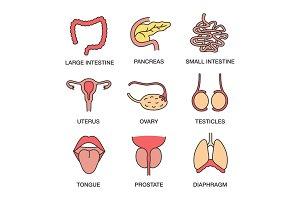 Human internal organs color icons