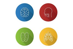 Internal organs icons set