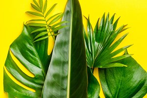 Tropical leaves and flowers on yello