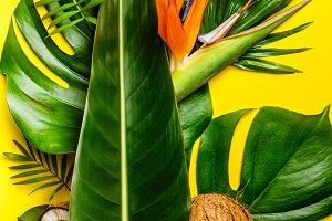 Coconuts and tropical leaves