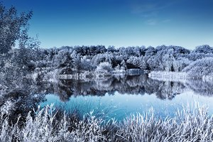 Clear lake in a forest. Winter look