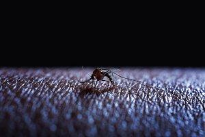 Mosquito sucking human blood on skin
