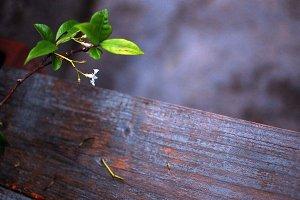 Petite Blossom