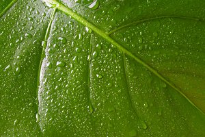 closeup leaf with water drops