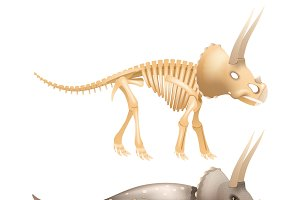Triceratops dinosaur with skeleton
