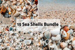 Sea Shells Bundle