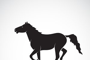 Vector of horse on white background.