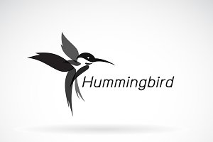 Vector of hummingbird design. Bird.