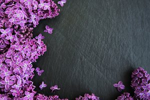 Lilac flowers as a frame