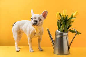 dog standing near watering can with
