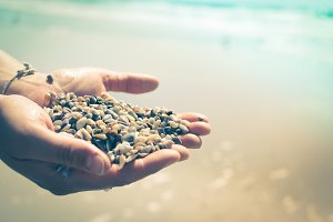 Hands holding shells: discovery