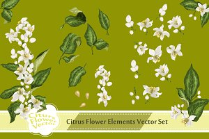 Citrus Flowers and Leaves in Vector