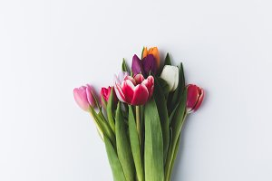 beautiful colorful tulip flowers iso