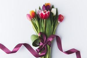 beautiful colorful tulips with purpl