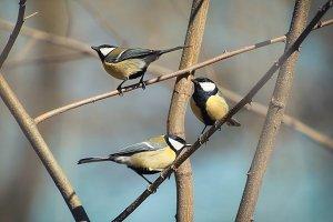 Birds on brach