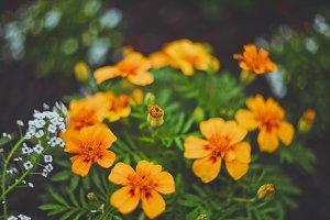 Beautiful orange little flowers