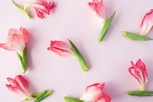 Flowers on pastel background pattern