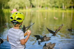 Boy feeding ducks and pigeons in the