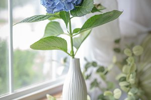 Single Hydrangea Bloom in Vase