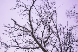 Looking up at trees branches in
