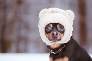 A dog in a hat, a funny puppy