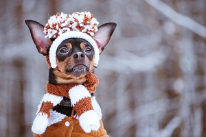 Funny puppy, a dog in a winter