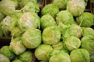 Group of green cabbages