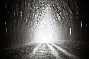 Foggy Tree Canopy