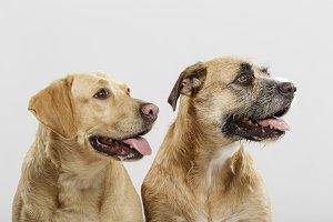 Couple of nice mongrel dogs posing i
