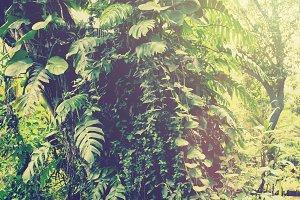 Tropical garden mist