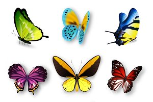 Realistic butterfly set