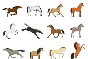 Best horses breeds icons collection