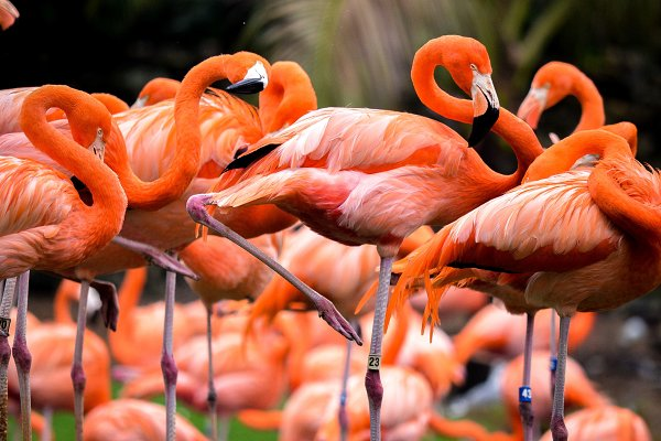 Animal Stock Photos: 10Twenty3 Design&Imagery - Flamingos