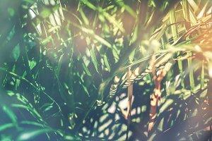Creative tropical green leaves