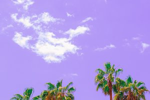 Minimal tropical purple art. Palm. C